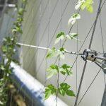 Jakob Webnet Greening