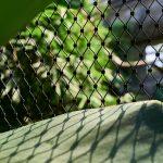 Jakob Spectral Webnet for Animal Enclosures