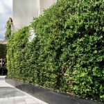 Drapers Garden Jakob Green Wall System