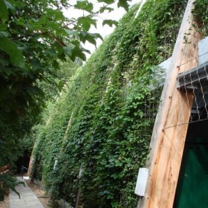 Green Wall growth rates, what can you expect?